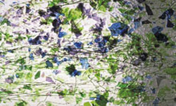 CLEAR, GREENS, PURPLE, BLUE FRACTURES