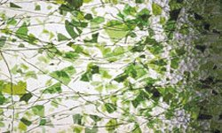 CLEAR, GREEN FRACTURES & GREEN STREAMERS by OCEANSIDE COMPATIBLE & SYSTEM 96